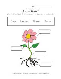 plant parts worksheets davezan