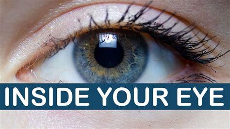 Look Inside Your can you look inside your eye littlearttalks