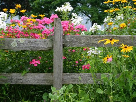 Planting A Flower Garden List Of The Best Perennial Flowers Diy