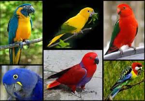 burung burung terindah cakrawala