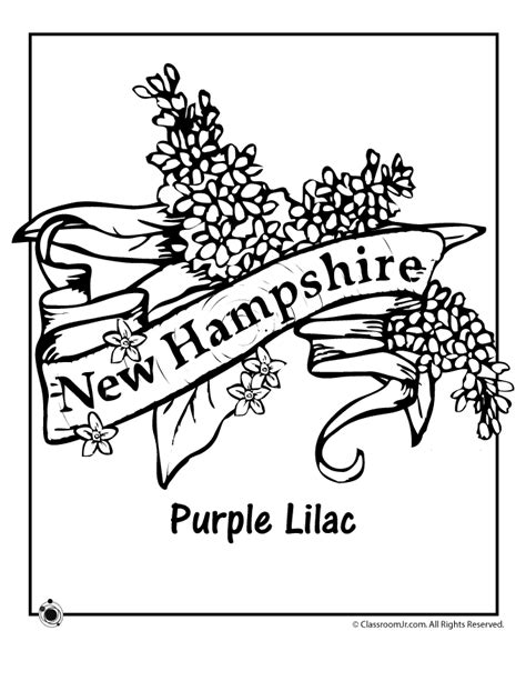 coloring pictures of state flowers new hshire state flower coloring page woo jr kids