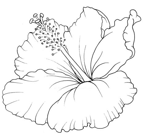 free coloring pages of tropical flowers hawaiian flower coloring book page