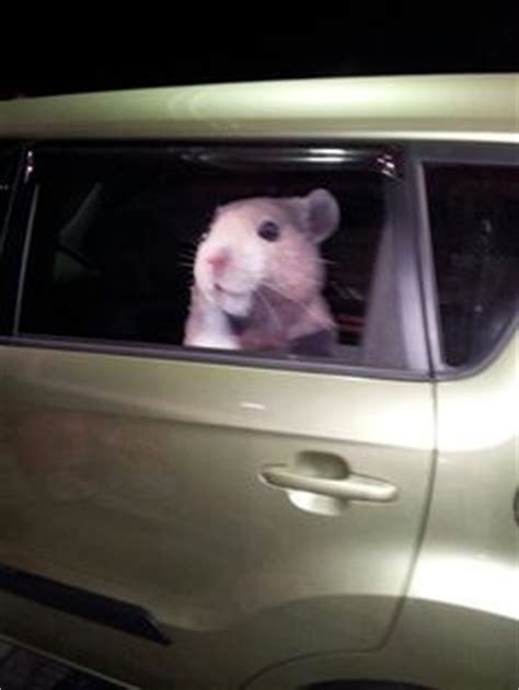 Kia Soul Hamster Decal Soul Mods On Hamsters Decals And Thoughts