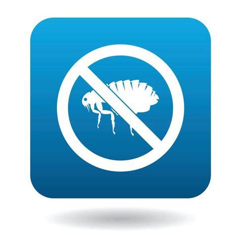 como eliminar las pulgas en casa c 243 mo eliminar las pulgas con bicarbonato de sodio