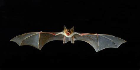 sognare insetti volanti bat box