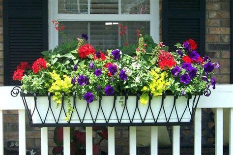 fiori per balconi fiori per balconi e terrazze nel mese di giugno lavori