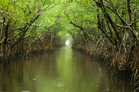 the and archaeology of florida s wetlands telford press books report everglades plans hurt by financial procedural