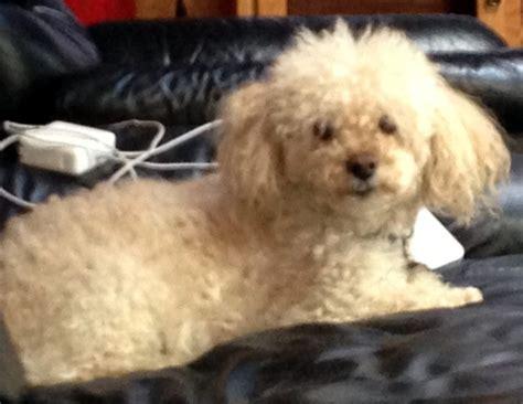 shelters in ri shelter sunday animals depend on cranston ri doggies