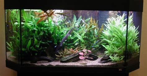 membuat filter aquarium murah contoh membuat dekorasi akuarium dengan biaya murah