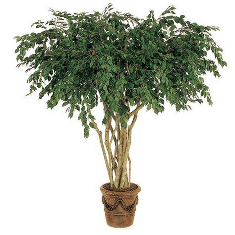 Plante D Appartement D Origine Tropicale by Les Plantes D Int 233 Rieur Modernes Comme Une D 233 Coration
