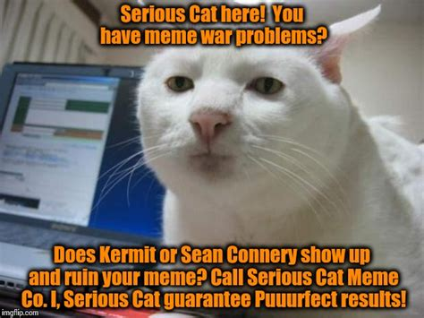 Cat Problems Meme - this has been a paid infomercial by serious cat meme