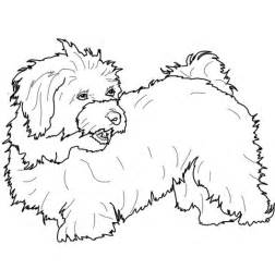 havanese dog coloring page havanese coloring page havanese dog coloring page
