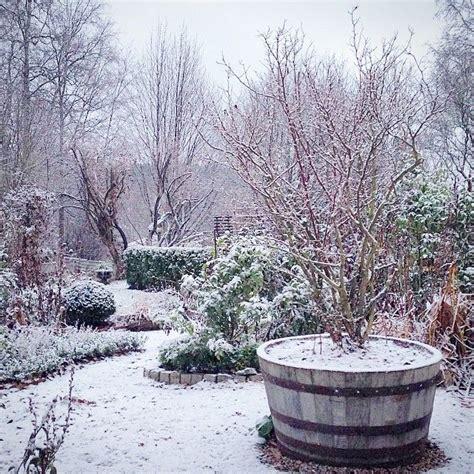 winter backyard 102 best gardens in winter images on pinterest