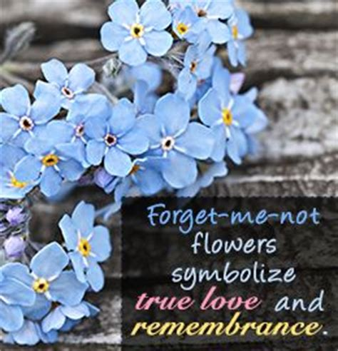 evoking curiosity what do forget me not flowers
