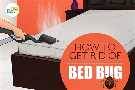 rid  bed bugs fast  permanently    spray