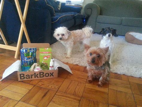 barkbox for puppies small barkbox review friendly indy