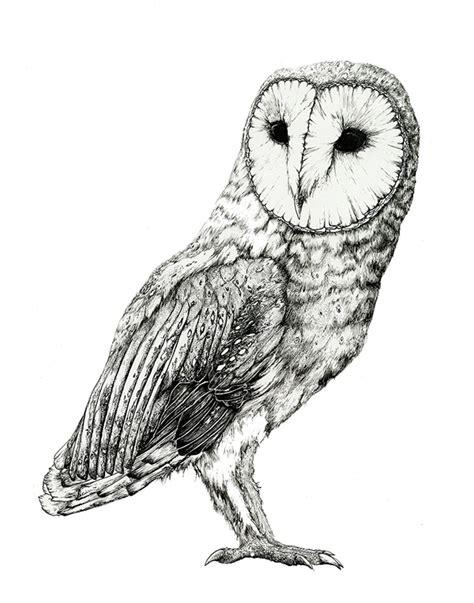 Barn Owl Pen And Ink Study On Scad Portfolios Barn Owl Drawing