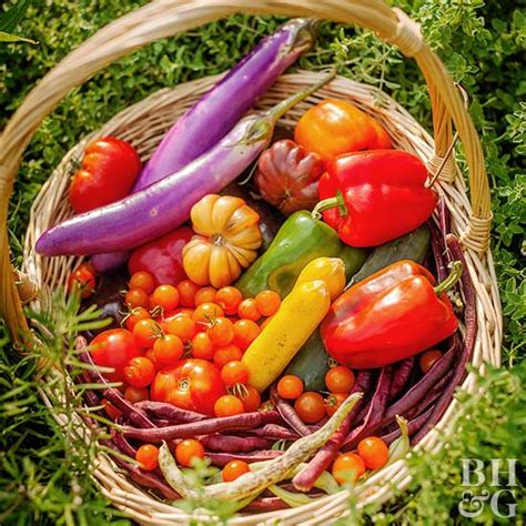 gardening vegetables 10 vegetable gardening mistakes even gardeners make