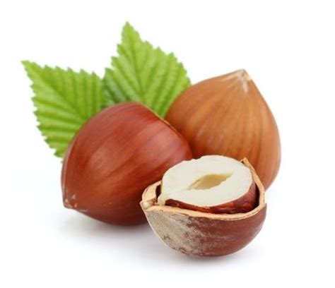 Hazelnut Organic organic hazelnuts buy organic hazelnuts in bulk from