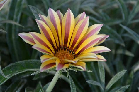 Daun Semi gambar alam menanam daun bunga berkembang bunga