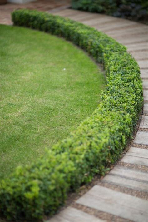 Formal Front Yard Landscaping Ideas - 25 best ideas about boxwood hedge on pinterest hedges hedges landscaping and patio