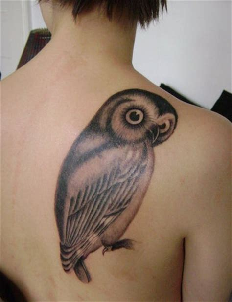 owl tattoo background owls images owl tattoo wallpaper and background photos