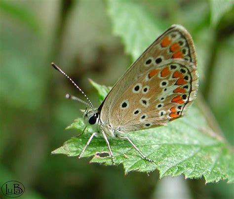 farfalle e fiori screensaver farfalle e fiori