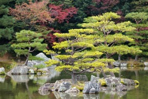 Zen Garden Design by Image 12946295 Japanese Zen Garden In Kinkakuji Temple