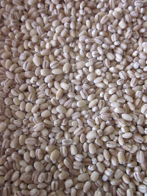 Hulled Barley hearty and healthy barley and chickpea pilaf simple sustenance
