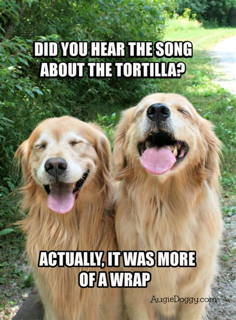 Golden Retriever Meme - funny golden retriever tortilla joke meme postcard awe
