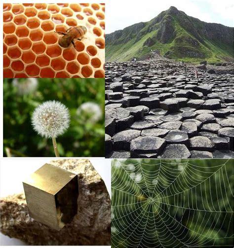 figuras geometricas naturales asombro verde geometr 205 a natural
