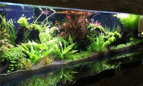 Aquascape Designs Products by Custom Aquarium Aquascape Design Aquariumplants