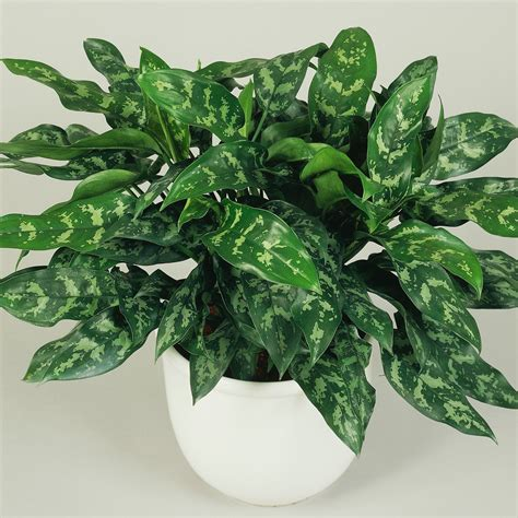 top houseplants for low medium and high light conditions 10 best houseplants for low light sunset magazine