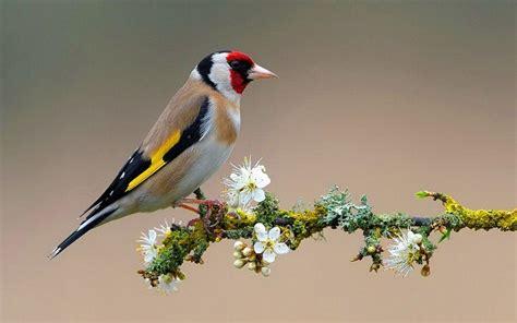 birds wallpapers wallpaper cave birds desktop wallpapers wallpaper cave