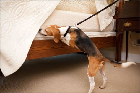 canine detection  bed bugs  houston