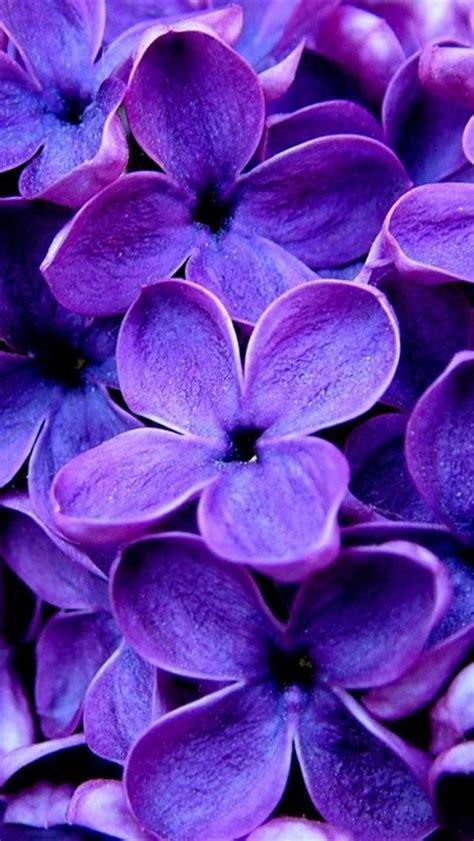 wallpaper girly flowers purple flowers iphone wallpaper background iphone