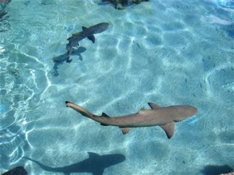 baby shark unlimited cute small baby sharks baby animal pictures