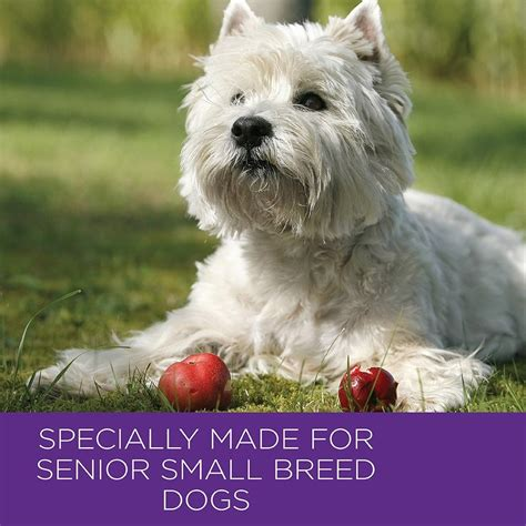 best senior food small breeds wellness small breed food recipes food
