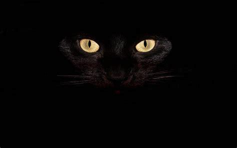 Imagenes Oscuras De Terror | fondo pantalla gato negro im 225 genes de miedo y fotos de