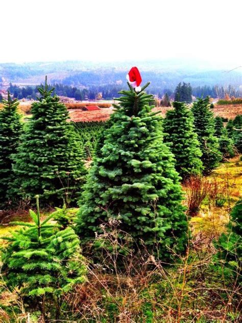 best oregon christmas tree farm the store and tree farm in oregon that s simply magical