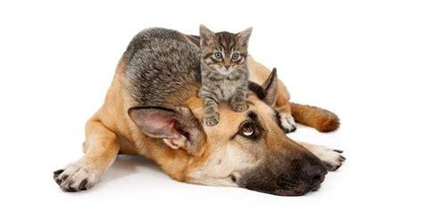 Anime Cinta Terbagus Apa Kucing Lebih Pintar Dari Anjing Merdeka