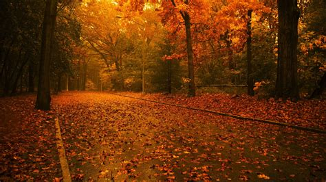 wallpaper free fall autumn road wallpaper 154960