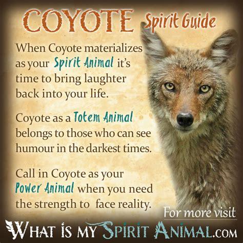 test animale totem coyote symbolism meaning spirit totem power animal