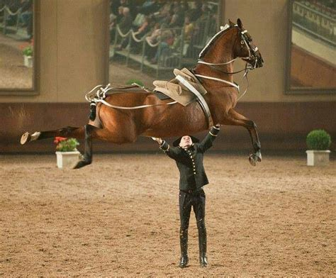 Jumping Animal By Acc 17 best images about horses lipizzaner on