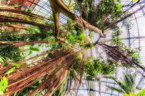 botanisches garten botanische g 228 rten botanischer garten