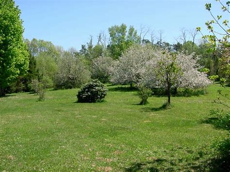 trees for the backyard duncannon pennsylvania house for sale on ten acres near