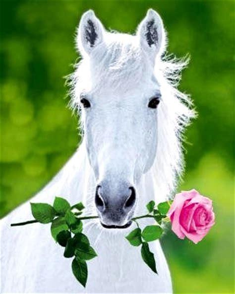 arti mimpi naik kuda putih berdua dengan pacar arti mimpi arti