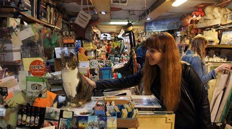 libreria acqua alta i gatti della libreria acqua alta di venezia un gioiello