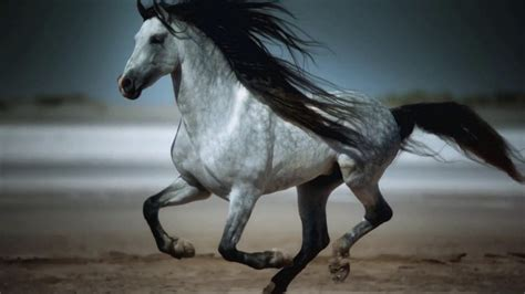 wallpaper horse free download horse wallpapers hd download