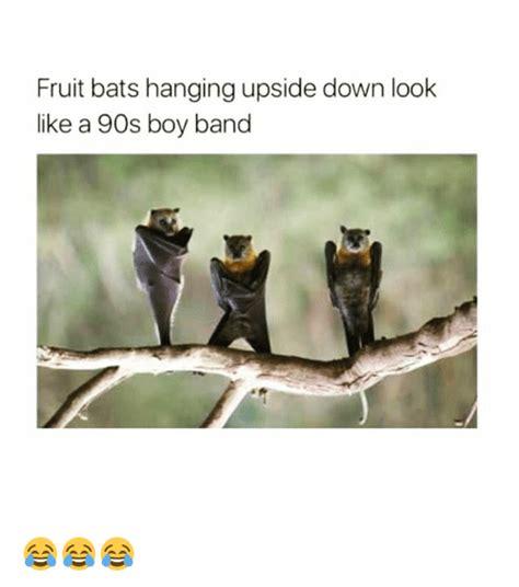 fruit bats band search band kid memes on me me